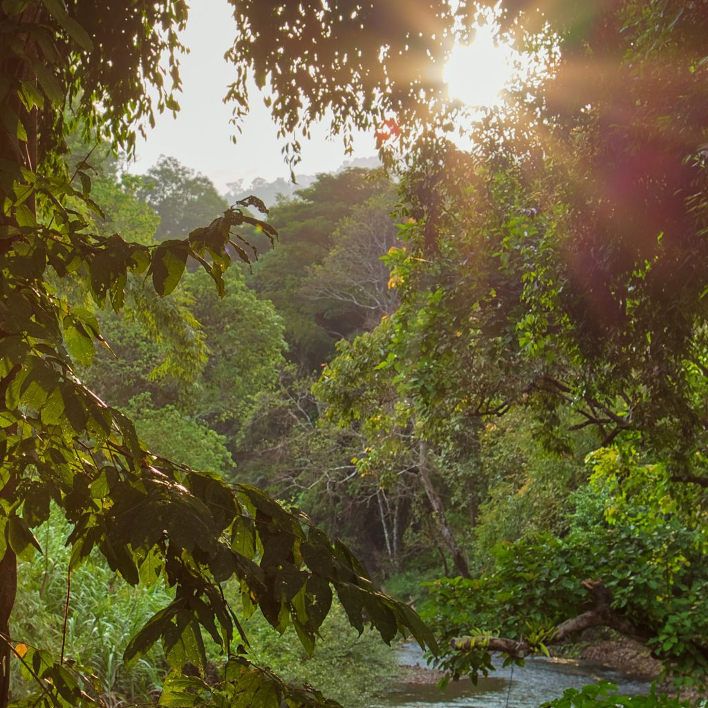 Khao Sok jungle - Our Jungle Camp