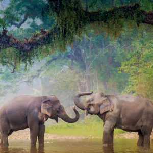 Elephants bathing in Khao Sok national park - Our Jungle Camp